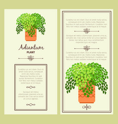 Greeting card with adiantum plant vector