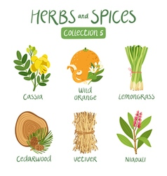 Herbs and spices collection 5 vector