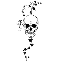 Skull and ivy vector