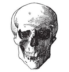 Skull vintage vector
