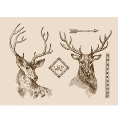 Hand drawn deer vector