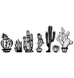 cactuses vector image vector image