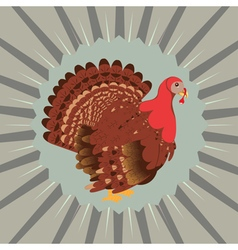 Cartoon turkey bird4 vector