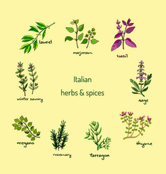 Italian herbs and spices vector