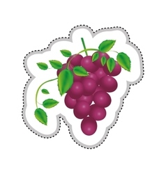 Grapes bunch icon image vector