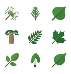 Flat icon natural set of foliage oaken baobab vector