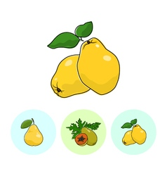 Fruit icons quince papaya pear vector