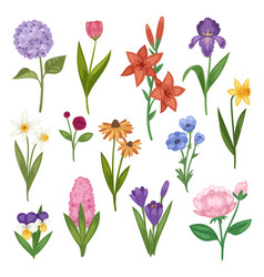 flowers and floral watercolor flowered vector image vector image