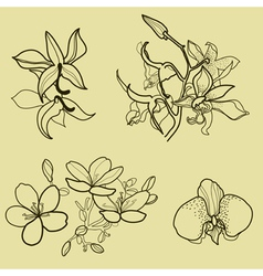 new flower set vector image
