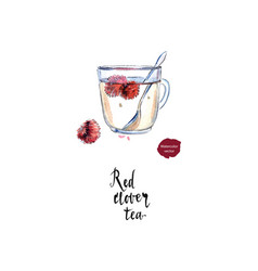 Red clover flower tea in watercolor vector