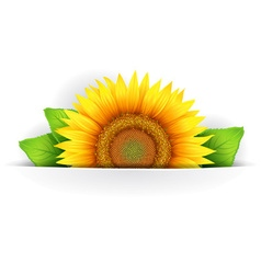 Flower of sunflower vector
