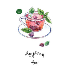 glass cup of summer raspberry tea watercolor vector image vector image