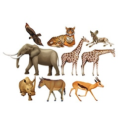 Various kind of wild animals vector