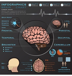 Brain and nervous system medical infographic vector