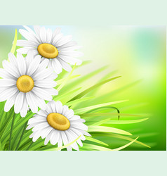 chamomiles and grass vector image vector image
