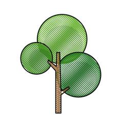 Drawing green tree nature flora botanical vector