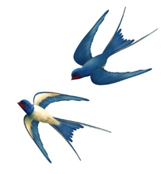 Flying Swallows vector image