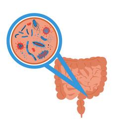 intestinal flora sign vector image