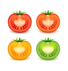 Set of red green orange yellow fresh cut tomatoes vector