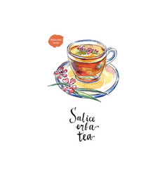 glass cup of salice erba tea in watercolor vector image