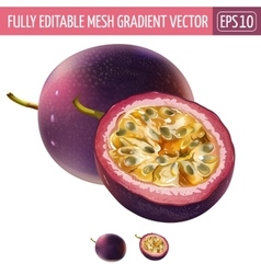Passionfruit on white background vector