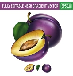 Plum on white background vector
