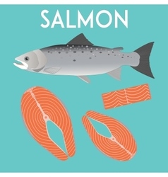 Salmon isolated and slices of red fish vector