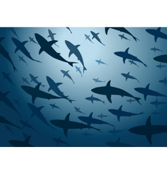 Shark school vector image