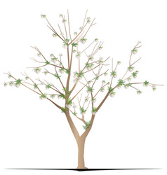 Cotton tree vector