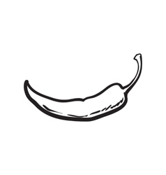 Hand drawn red hot chili pepper isolated on white vector