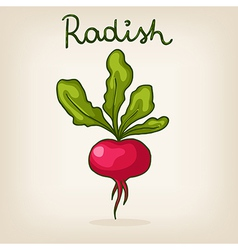 Hand drawn shiny radish vector