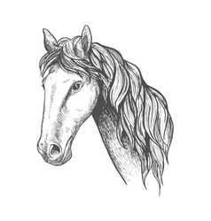 Racehorse of appaloosa breed sketch symbol vector image