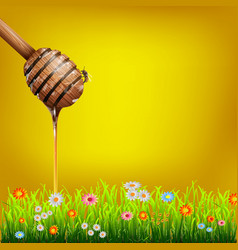 Honey dipper vector image vector image