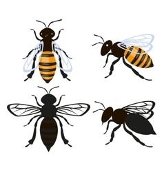 Set bee insect vector image vector image