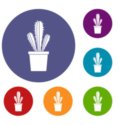 Cactus in flower pot icons set vector