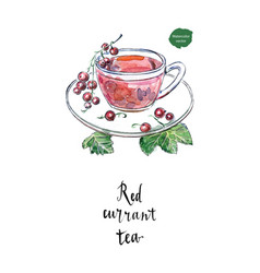 glass cup of red currant in watercolor vector image vector image