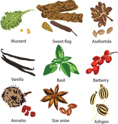 set of different spices vector image vector image