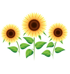 sunflower cartoon icons set vector image