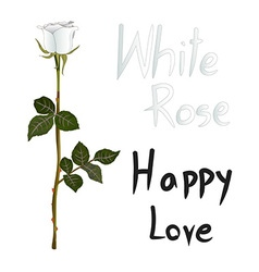 White rose meaning vector