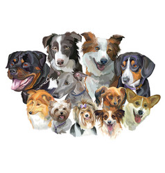 different dog breeds vector image vector image
