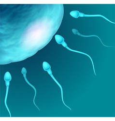 Cartoon of sperms going to the ovule vector image