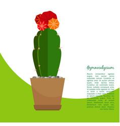 Gymnocalycium indoor plant in pot banner vector