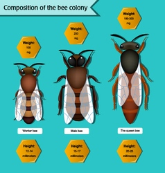 Informative poster on the composition of the bee vector
