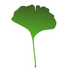 Ginkgo leaf vector