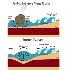 Establishment of tsunami vector