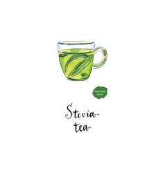 herbal tea in glass cup with stevia watercolor vector image vector image