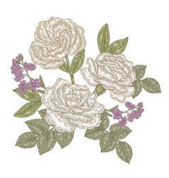 White roses and eustoma flowers vintage hand vector