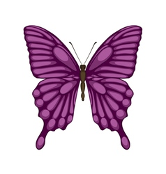 butterfly isolated on white with watercolor effect vector image