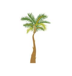 Palm tree cartoon vector