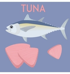 Tuna fish and tuna steaks cool vector
